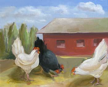 Barn Dance 5064