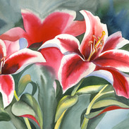 6151 Valentine Lilies