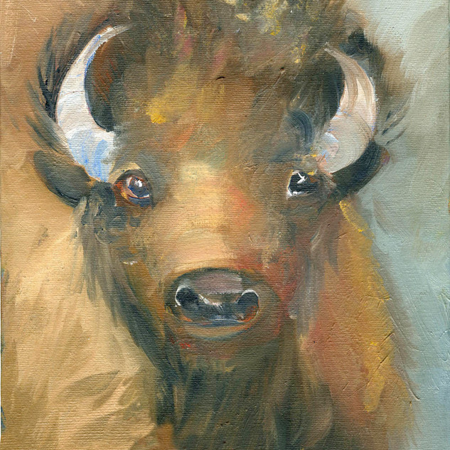 Bison Portrait 7400