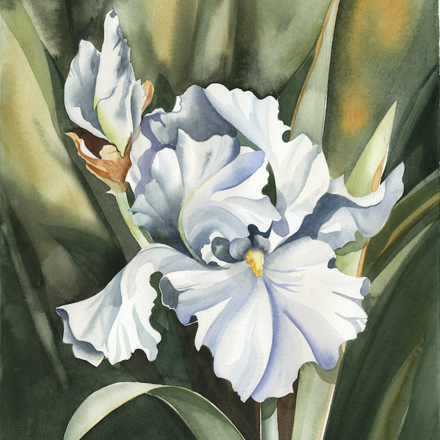 2126 Pristine Iris