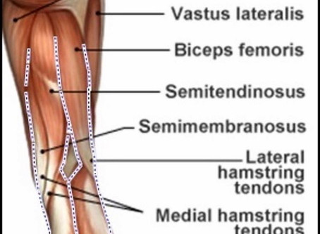 Deconstructing Down Dog Part 7 of 10 The Hamstring group