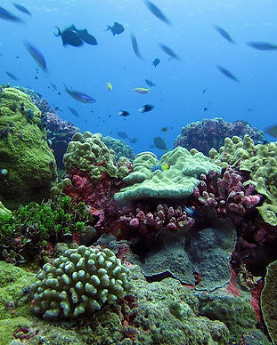 Roatan-Coral.jpg