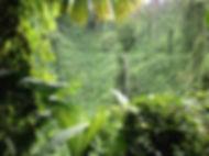 Nature Hike in Osa Peninsula Costa Rica