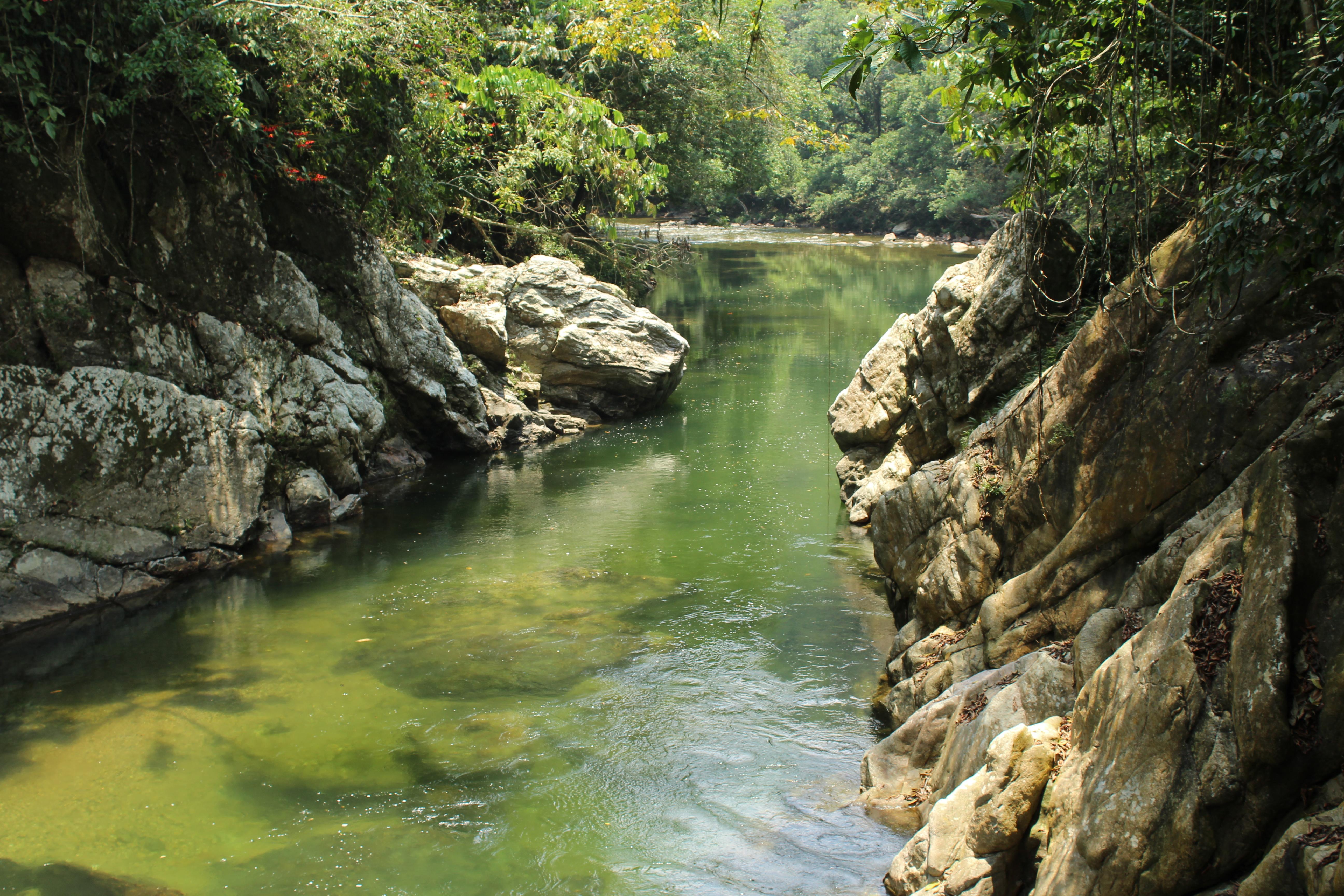 Rio Claro reserva el tigrillo