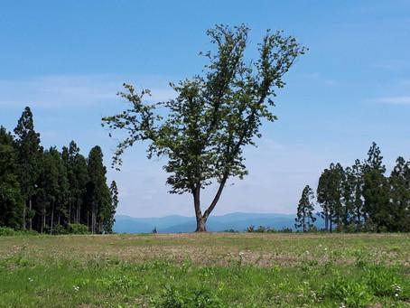 萬松寺裏山の整備