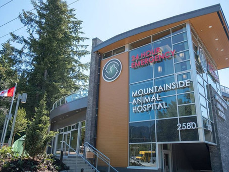 Mountainside Animal Hospital