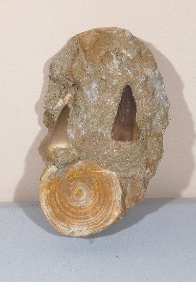Mosasaur Tooth And Fish Bone In Matrix