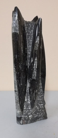Medium Orthoceras Statue 2.48KG
