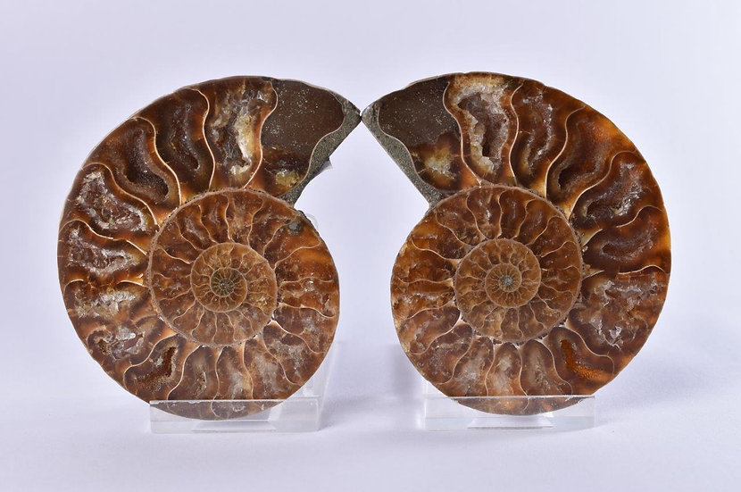 Cut and Cut Polished Ammonite Pair - 90mm