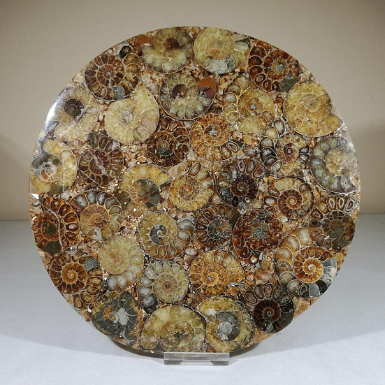 Large Ammonite Plate