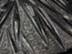 finestfossils.co.uk Fossils Trilobites A