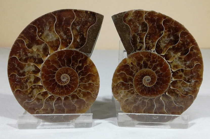 Cut And Polished Ammonite 70mm