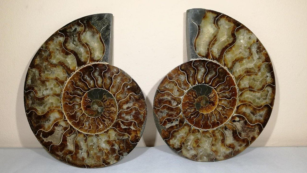 Large Cut And Polished Ammonite Pair 180mm
