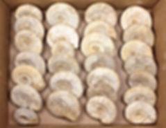 www.FossilEra.com-specimen-254-103889-4.