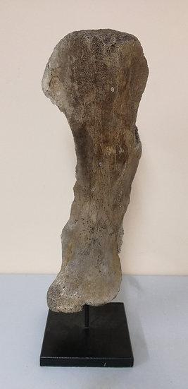 Mammoth Shoulder Blade Bone On A Stand