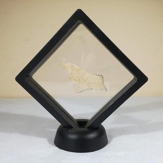 Framed Aepyornis Egg Shell