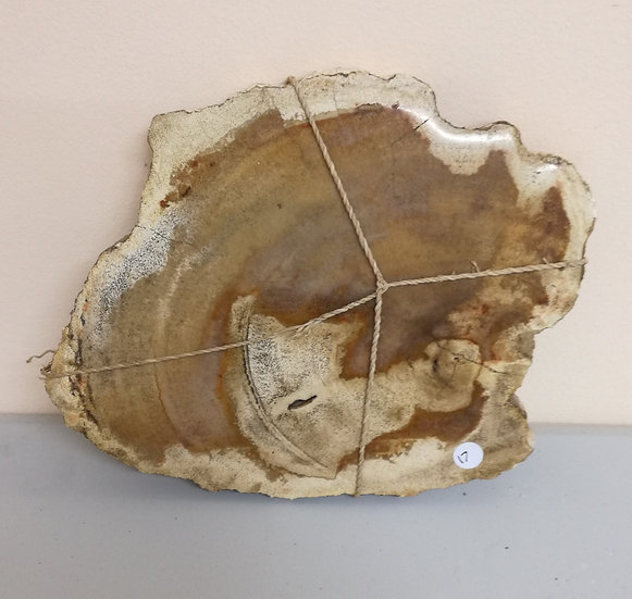 Petrified Wood Slice 1.14kg