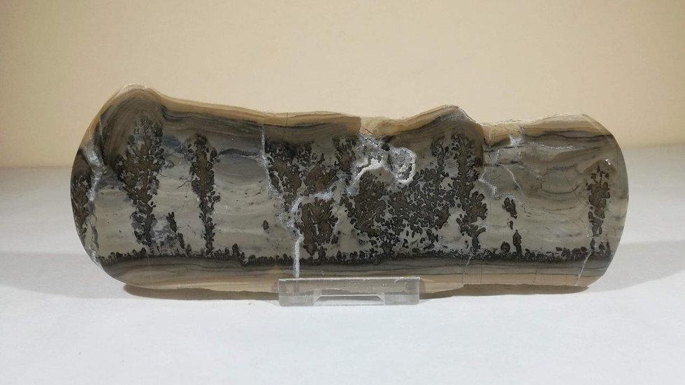 Large Cotham Marble (Stromatolite - Fossilised Algae