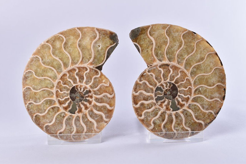 Cut and Cut Polished Ammonite Pair - 95mm
