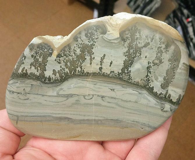 Cotham Marble (Stromatolite - Fossilised Algae)