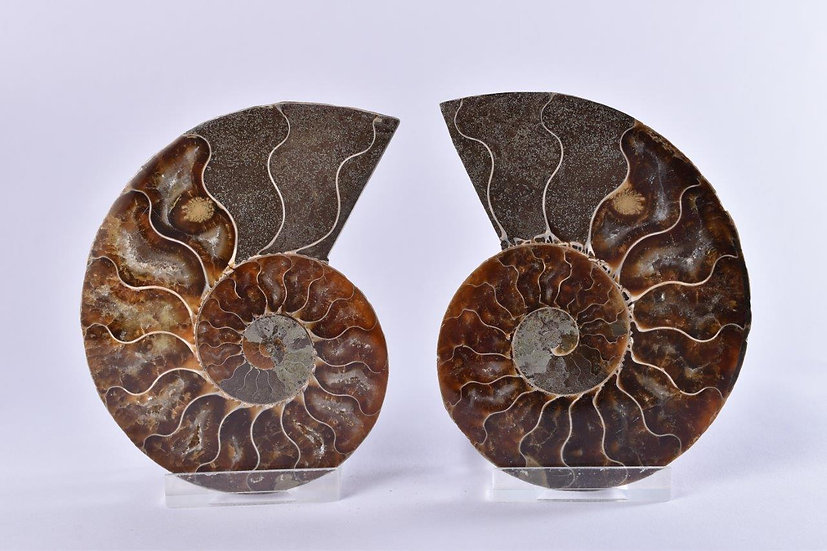 Cut And Polished Ammonite Pair 100mm