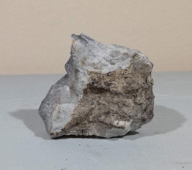 Natural Dinosaur Coprolite
