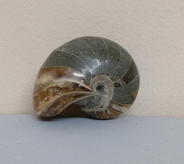 Polished Nautilus Shell - 118g