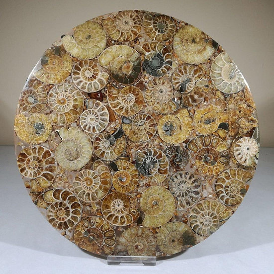Large Ammonite Plate