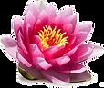 lotus%205_edited.png