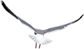 77-770008_free-png-birds-png-images-tran