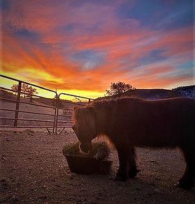 Bonnie at sunrise 2021.jpg