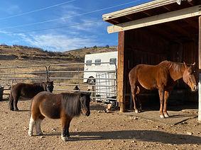 horses meditating.JPG