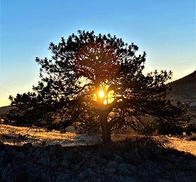 sunrise through tree.JPG
