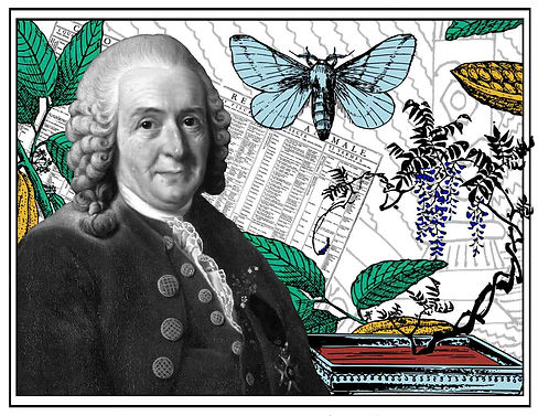 Carl Linnaeus a.k.a. Carl von Linne digital collage image by V.Neblik