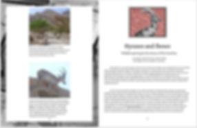 MCATI Hyraxes and Ibexes.jpg