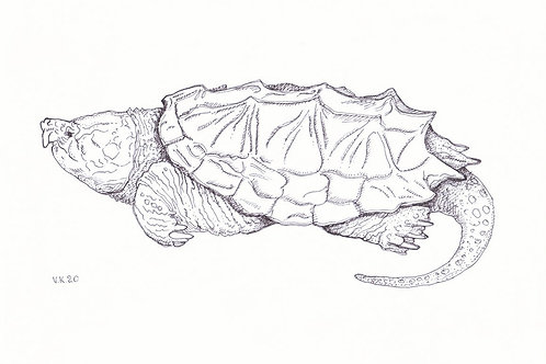REEF Alligator Snapping Turtle
