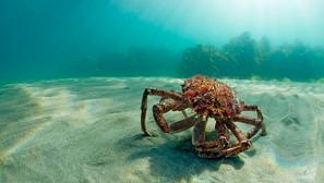 REEF Voices: Crabs