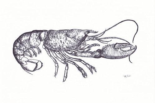 REEF Pistol Shrimp