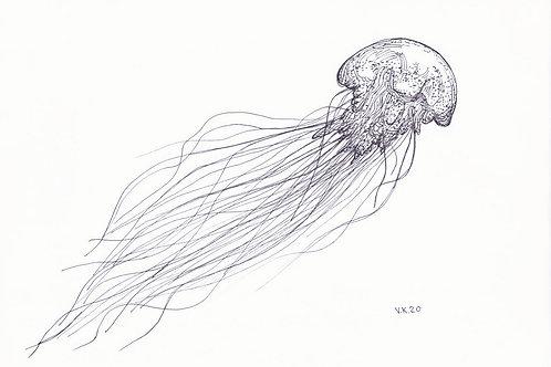 REEF Jellyfish