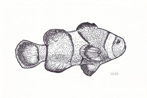 REEF Clownfish
