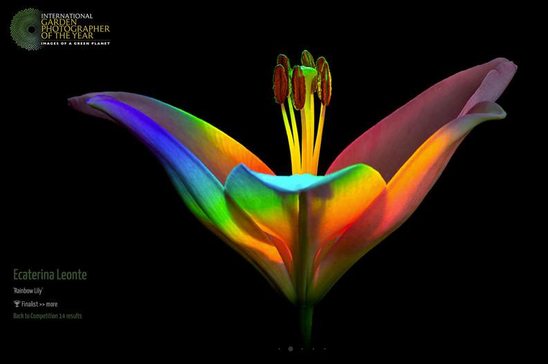 igpoty-flower.jpg