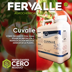 cuvlle tomate_cartilla