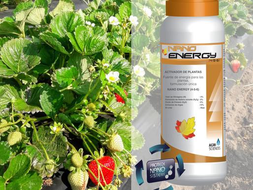 Nano Fertilizantes en FRUTILLAS 🍓