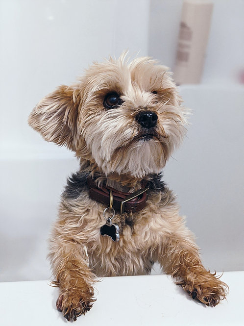 Full Service Grooming - Toy Breeds