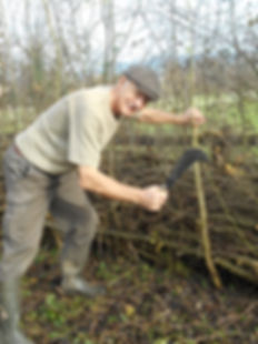 Hedge laying Courses 2.jpg