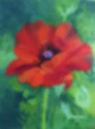 Nature Canvas Prints Scottsdale, AZ