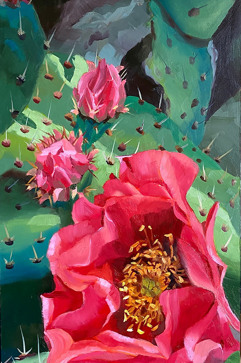 pink cactus flowers, prickly pear cactus, new hope