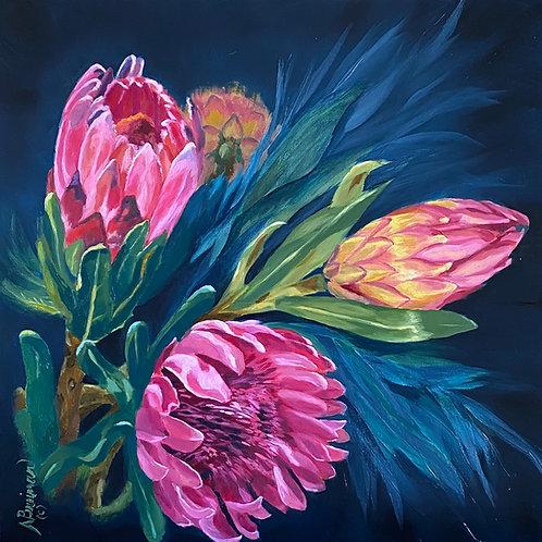 protea, pink protea, proteas, pink, blue,
