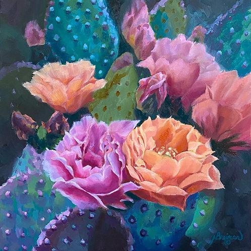 pink and coral cactus, southwest cactus blooms, desert cactus,