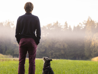 2 Things Your Dog is Looking For